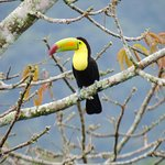 A birdwatcher's paradise!  Keel-billed Toucan