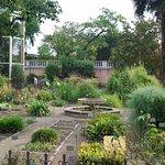 Invernadero de palma de Goethe