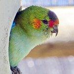 Nesting parrots