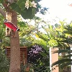 Bird feeder viewed from patio