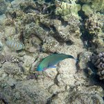 Snorkeling the nature reserve