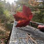 Lovely fall foliage along the nature trails.