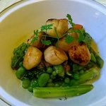 local scallops served with spring vegetables