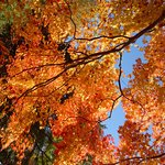 曽木公園 紅葉2