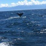 Whale Watch Foto