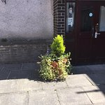 Wee potted plant outside The Crannog door