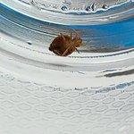 Bedbug room 703!