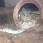 Foto de Guindy Snake Park