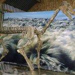 Photo of El Calafate Historical Interpretation Center