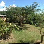 casa nueva, pool  and new plantain trees from the family cabaña