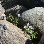 Flowers among the rocks