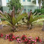 Nice tropical plants at entrance