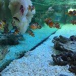 Pusat Ikan Hiasan