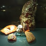 Foto di Amber Museum-Gallery (Gintaro Muziejus-Galerija)
