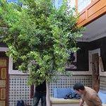 Plantation d'un nouvel arbre