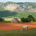 View from horsebacking riding in Vinales valley, near Villa Marisol.