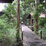 Abai Jungle Lodge Φωτογραφία