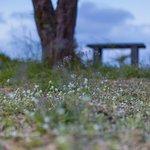 Wild flowers on the grass field