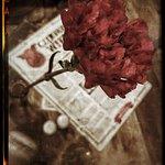 Czerwony Wieprz Foto