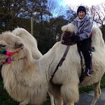 Joseph's Camels and me .