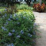 Flowers along the walkway