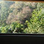 IMG_20161101_084308_large.jpg