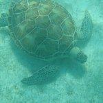 Cancun Adventures Foto
