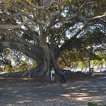 At the Morton Bay Fig - can you see us??