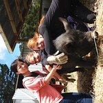 Foto de A Kiwi Farmstay