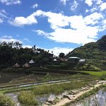 View of the rice terraces