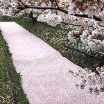 Philosopher's Walk Foto