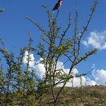 Pilanesberg National Park Foto