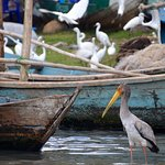 Dunga Bay Image