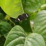 Visitante descansa en las hojas del tumbo, que crece feliz..