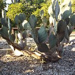 Cacti at the park