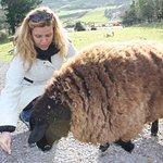 Interactuar con los animales es posible en Molly Gallivan's