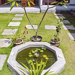 Plant and pond