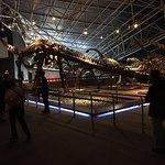 huge fossil skeletons 2+ stories tall