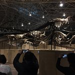 you can walk right under these fossil skeletons, an up-close experience