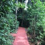Cabanas Luces de la Selva Picture
