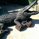 Authentic Cajun, complete with life-size Gator!