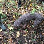 The Truffle Hunter Foto