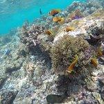 Underwater life of the Indian Ocean