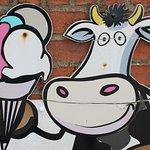 Mr Moo's Real Dairy Ice Cream