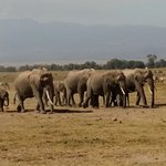 Photo of Amboseli Serena Safari Lodge