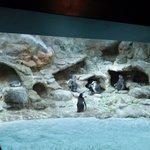 Penguin habitat