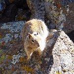Cave Squirrel