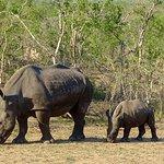 Foto de Elephant Plains Game Lodge