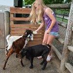 Photo de Grant's Farm