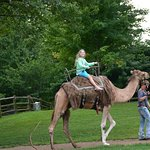 Guided camel rides.